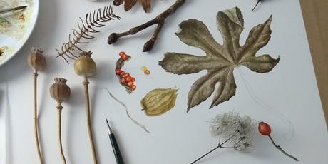 Botanical Art Workshop - Exploring autumn colour and detail with Julia Trickey tickets