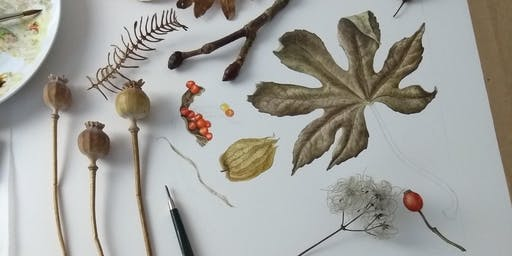 Botanical Art Workshop - Exploring autumn colour and detail with Julia Trickey