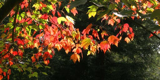 How to Make Your Garden Beautiful in Autumn