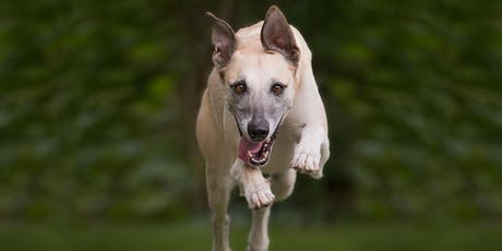 Dogs in action - Elke Vogelsang - Sunday tickets