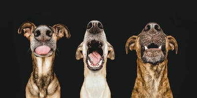 Dogsonality - a creative guide to dog photography - Friday