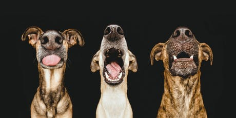 Dogsonality - a creative guide to dog photography - Friday tickets