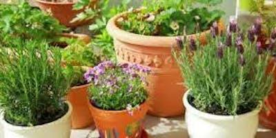 Cultivo,Colheita e Beneficiamento de Condimentos em Pequeno Espaços - 26/05/2019