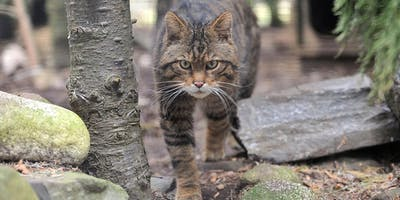 RZSS Specialist Sessions: Cat Conservation