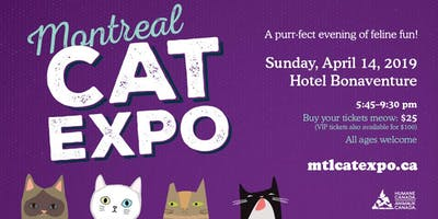 The Montreal Cat Expo