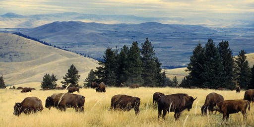 SOLD OUT! Naturalist Field Day: Tour the Bison Range with a Naturalist