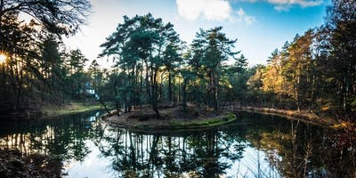 Forest Bathing (Shinrin-yoku) Walk in Zeist