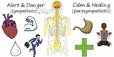 Från stress till läkning –Förstå vad ditt nervssystem behöver