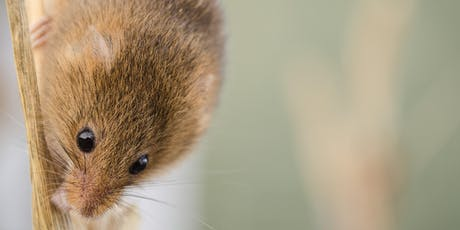 Harvest Mouse Day - Doxey, Stafford  tickets