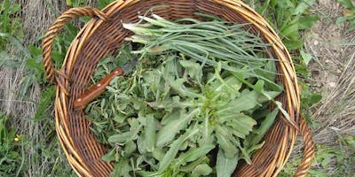 Spring detox with native herbs