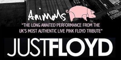 Just Floyd Pink Floyd Tribute - Live at Woodlands Academy, Gillingham
