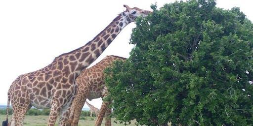 4 Days Masai Mara and  Nakuru National Park safari 2020 call 0710798172