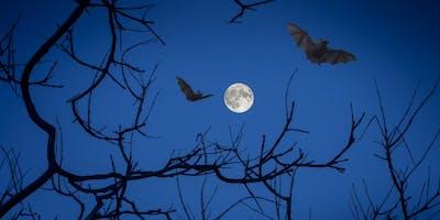 Bats Fantastic