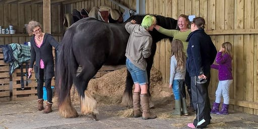 Horse Play for Girls 2019