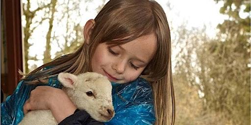 Lambing on the Farm