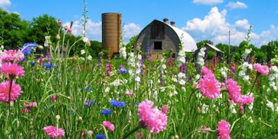 Flower Farming:  A Story of Hidden Hive Farm and The Slow Flower Movement
