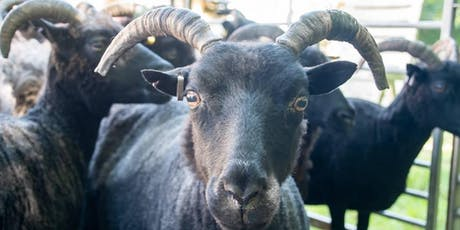 Sheep Shearing and Wool Craft Day  tickets