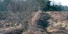 Ashdown Forest Archaeology Walk