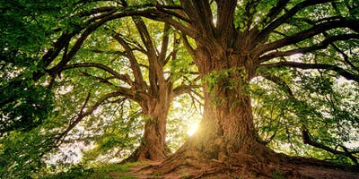 Healing Breath Qigong