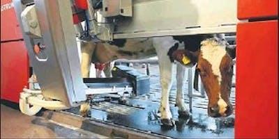 Come soddisfare i bisogni di vacche e robot per una stalla redditizia