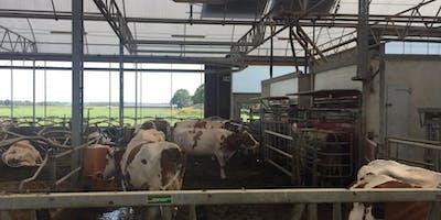 Apprendi i bisogni delle vacche e progetta la stalla con il robot di mungitura per aumentare produzione e reddito