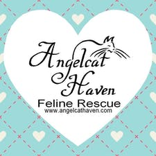 Angelcat Haven Feline Rescue logo