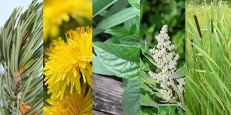 Ethnobotany Part 2: Edible and Medicinal Plants tickets
