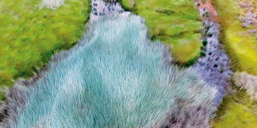 Wetland Wander (Exhibition Opening)