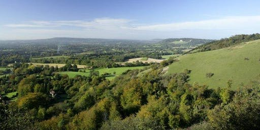 Forest Bathing+. National Trust - Box Hill, Surrey