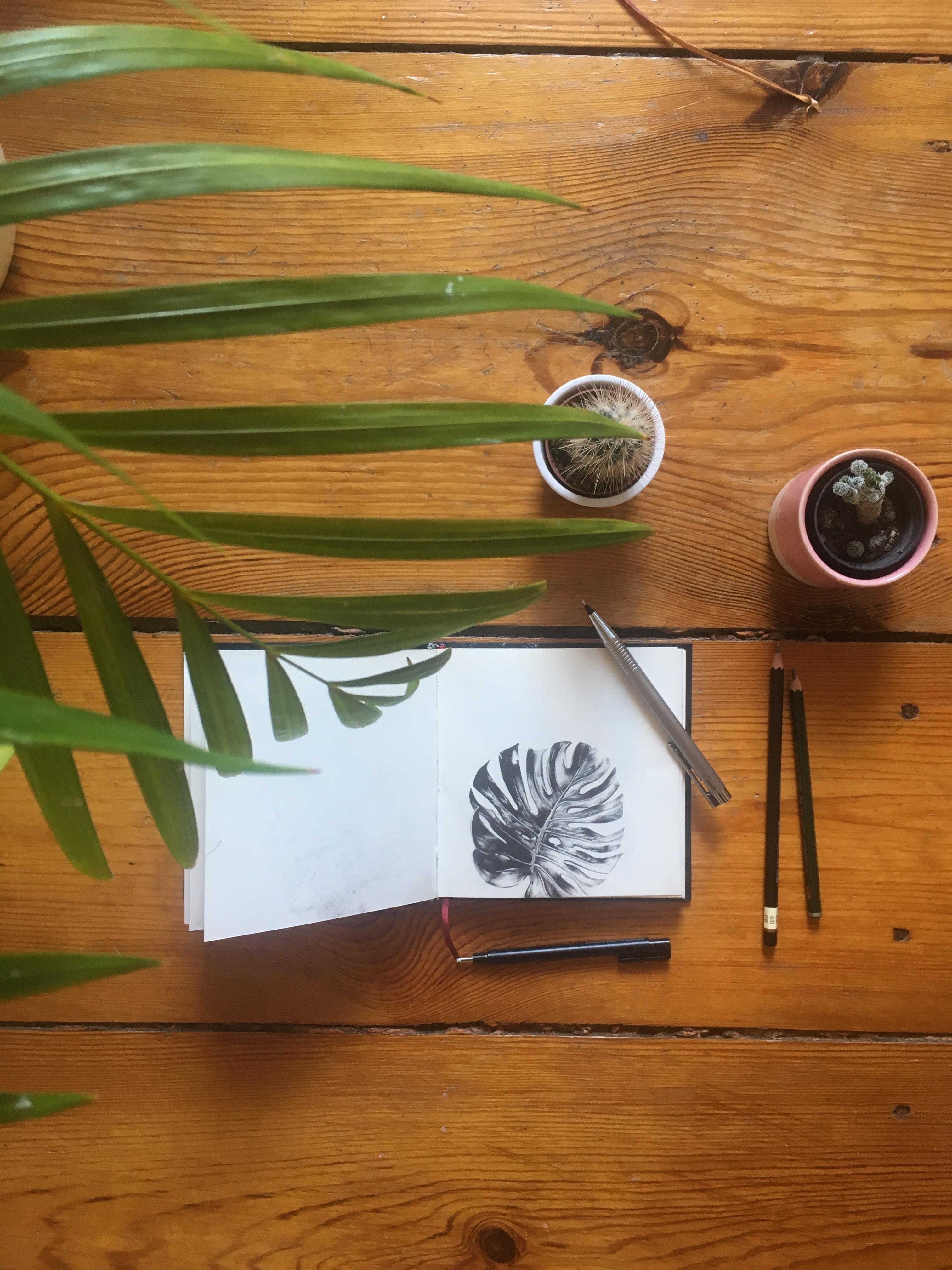 Botanical Pencil Drawing Workshop