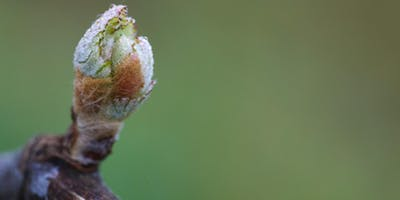 Vinifika Spring Tasting - wijndegustatie