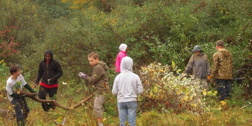 Invasive Plant Removal Drop-In - October 10