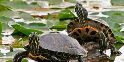 Turtle Public Paddle - Sultana Education Foundation