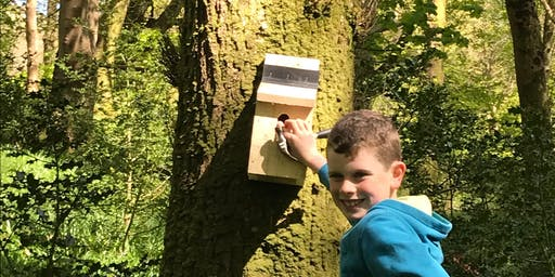 Squirrel box building for families