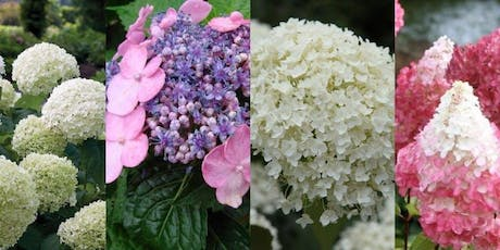 All About Hydrangeas tickets