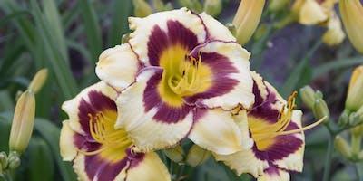 Free Garden Workshops - Dividing Perennials