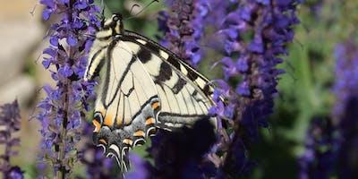 Free Garden Workshops - Plant a Pollinator Garden