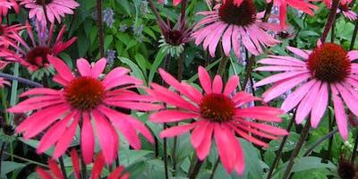 Free Garden Workshops - Long-blooming Perennials
