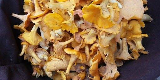 Fungi Foraging Workshop and Hike