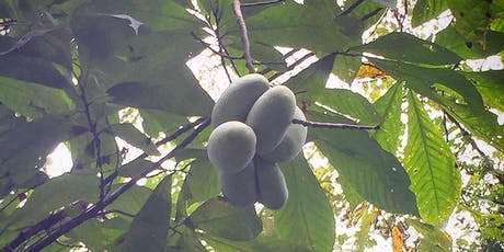 Pawpaw Foraging & Cultivation Workshop and Hike tickets