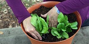 Spring Vegetable Container Gardening, February 19th,...