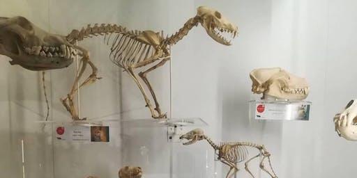 Museum of Zoology Photo Walk