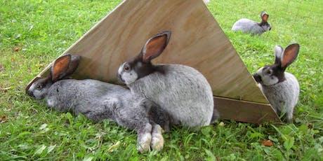 Rabbit Processing Workshop tickets