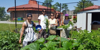 Volunteer at the Theodore Hagans Community Farm and Greenhouse!