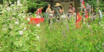 Plantes sauvages comestibles - Atelier au jardin