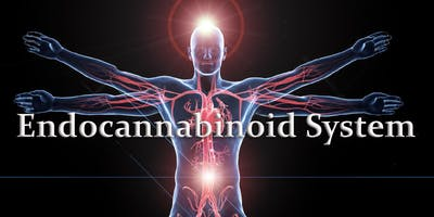 Activate and support the endocannabinoid system using phytonutrients and essential oils: learn to present