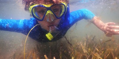 2019 Seagrass Survey