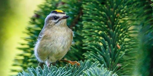 Monthly Birding Walk in the Garden