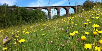 National Meadows Day