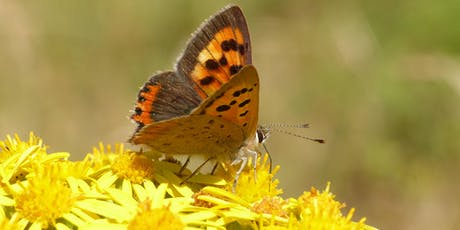 Newgate Nature Reserve Butterfly Walk tickets